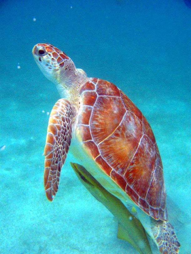 Snorkel Riviera Maya 2