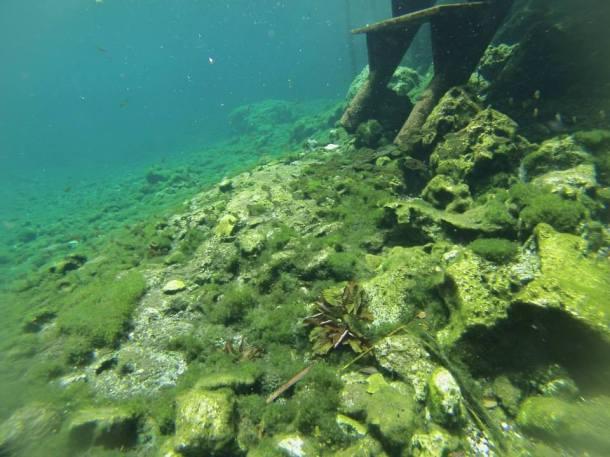 Snorkel Riviera Maya
