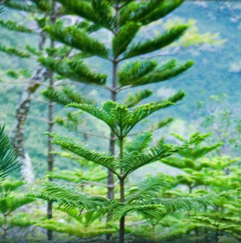 plant12tree